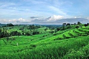 Jatiluwih The Best Rice Terrace In Bali Bali Tours