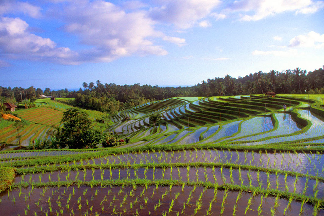 Pupuan-Rice-Terrace