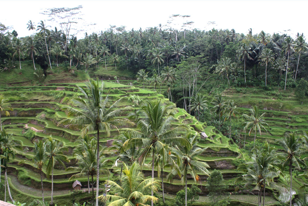 Tegalalang ubud best rice terrace bali tours for Tegalalang rice terrace ubud