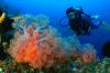 Bali Dive