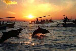 Bali-Dolphin-Tour