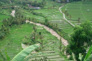 Busungbiu Rice Terrace